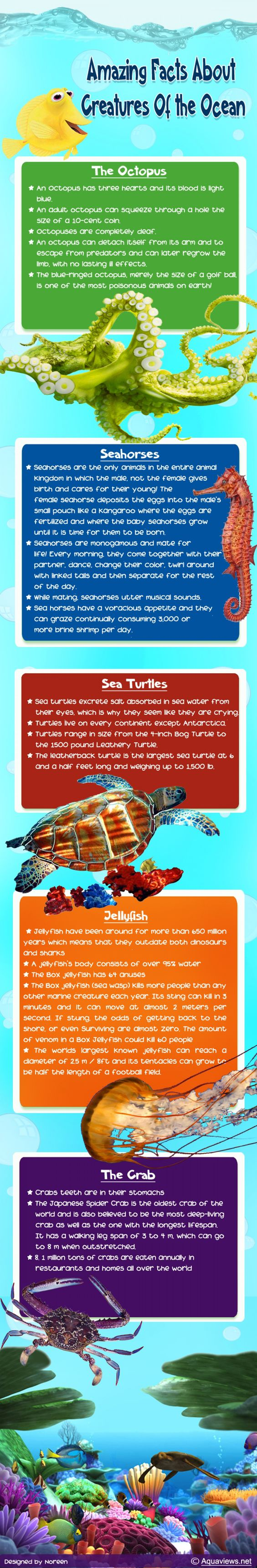 Amazing Facts About Creatures of the Ocean  Infographic