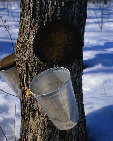 You need just a small amount of maple syrup to sweeten your coffee, baked goods, or oatmeal, and it's actually good for you. Scientists recently discovered more than 50 compounds in maple syrup known to battle cancer and heart disease.