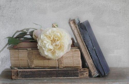 Old Books - Rose, Natureza-Morta, coisa velha, Branco, 1920x1080 ou superior, homem branco, Rosa Branco, Rose Wallpaper Rose, livro velho, ancião