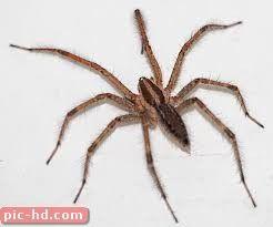 صور العناكب انواع العناكب ومعلومات عنها Spider Wolf Spider Arachnids