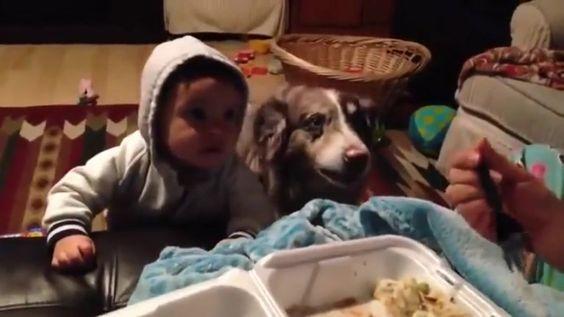 Matka uczy dziecko pierwszego słowa , ale pies okazał się szybszy od Pawłowa, mówi: MAMA:
