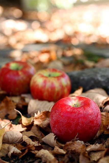 Apples and fallen leaves - from Seasonal Love