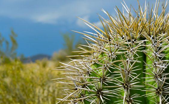 Natureza, Deserto, Planta, Cacto, Suculentas, Afiada