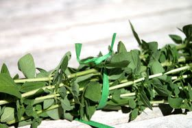 Tilly's Nest: Harvesting and Drying Herbs