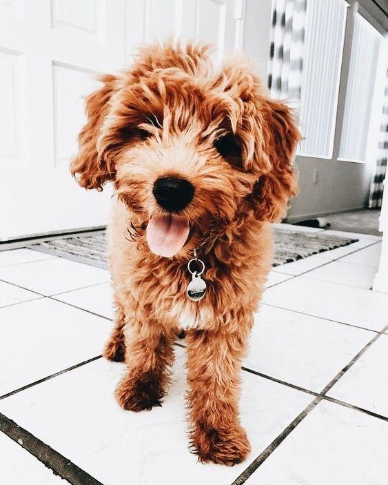 Pinterest Sadie Joyce Cute Animals Puppies Doggy