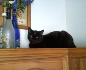 BESO is an adoptable Domestic Short Hair-Black Cat in West Milwaukee, WI. Hello my name is Beso. That means 'kisses' in Spanish and I love getting and giving kisses. I am a super sweet young man who i...