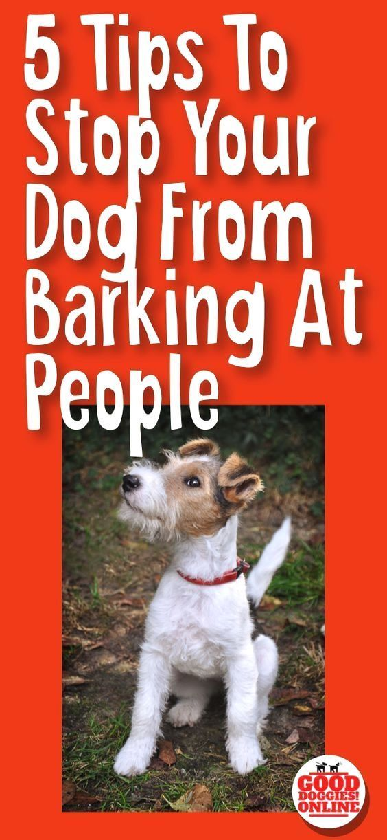 How To Stop A Dog From Barking Like A Boss Dog Training