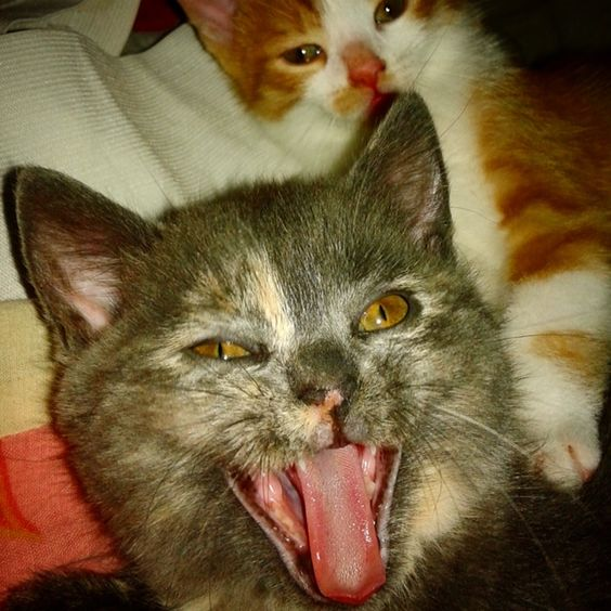 Cats, crazy, shout, meow, funny, myloves, drugs, both, ever, goodpic