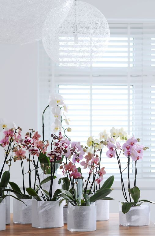 orchids: Orchids Flowers, Orchid Ideas, Flowers Plants, Indoor Orchids, Orchids Garden, Favorite Flower