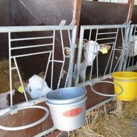 At the federal Minister of Agriculture: Stop the shameful attitude of calves in individual housing in boxes in a confined space! | Even animals have a dignity and are not only food for us humans! It should include a statutory provision be issued that calves may no longer be held in this ignoble form. Click for details and please SIGN and share petition. Thanks.