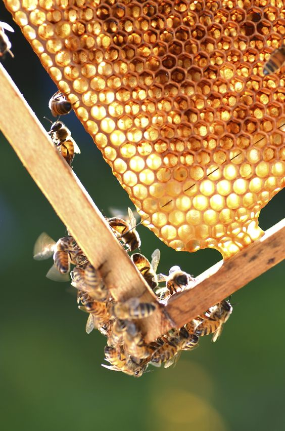 Starting beekeeping successfully requires knowledge of how to house and feed your bees for maximum return.