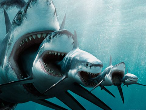Yo dawg i heard you like sharks so i made a shark eat for Fish that eat other fish