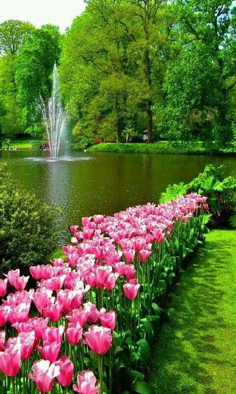 Imagem Flores Lindas Paisagens Belos Jardins E Lindas