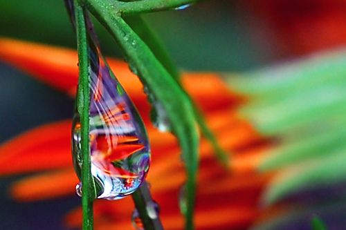 water jewell by Steve took it, via Flickr: Water Drops, Water Rain Drops, Nature Waterdrops, Dew Drops, Drop Photography