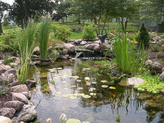 estanque con naturaleza