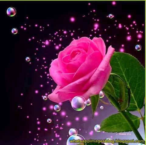 Beautiful Flowers Dp For Whatsapp Bestchristmasdeals Org Rose Pictures Beautiful Roses Flower Images