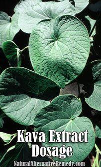 Kava Extract Dosage | NaturalAlternativeRemedy.com  #health #kava #herbs