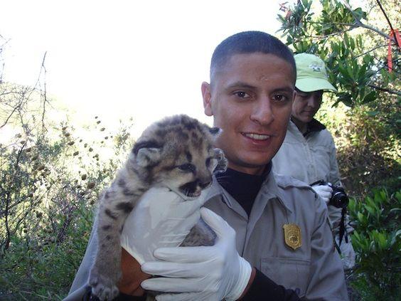 What do wildlife biologist do ?