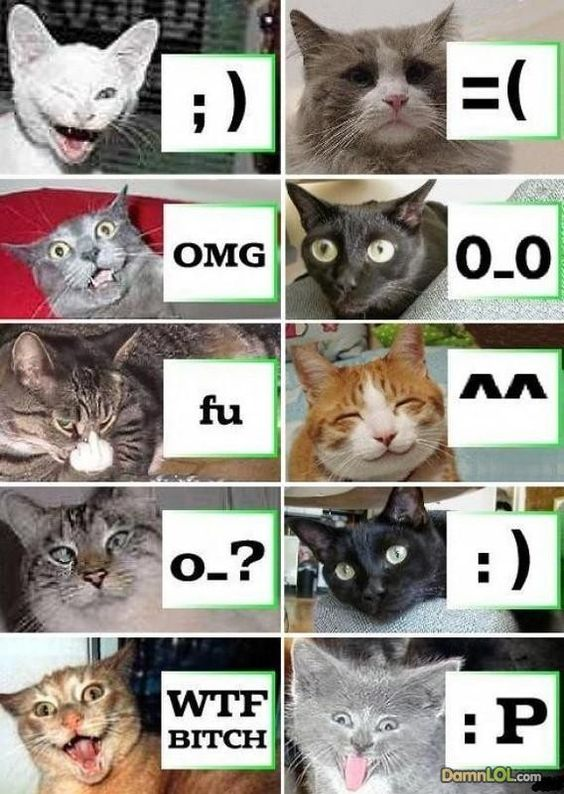 LOL emoticons explained by cats