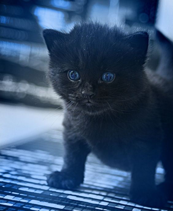 I Want A Black Kitty By Kay Arne Jensen Baby Cats Cute Animals Pets