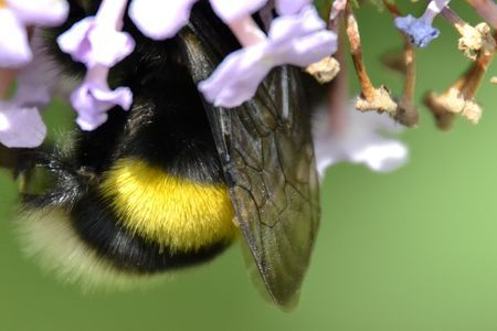 Bumblepiece... Photo by Paul Martens -- National Geographic Your Shot
