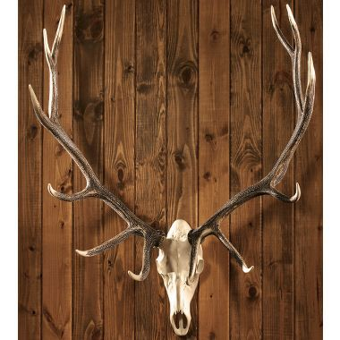 Cabela S European Mount Elk Trophy Products Hang On And