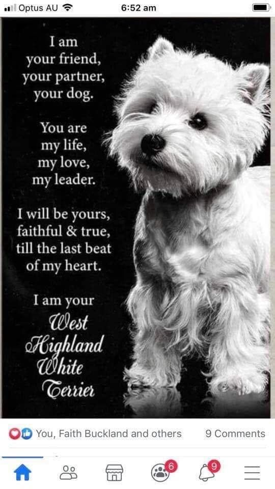 Pin By Melissa Molloy On Dogs In 2020 Dogs West Highland White