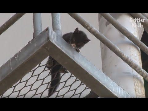 Gatito Moribundo Atrapado En El Puente Grita A La Gente Por Rescate An In 2020 Beautiful Cats Pictures Animal Rescue Cute Kitten Gif