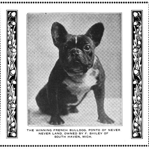 1890 Fernch Bulldog Photo By Pietoro Photobucket French