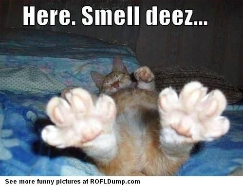 Smell these #meme #funny #lol #cat