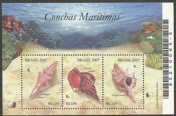 conchas marítimas - bloco
