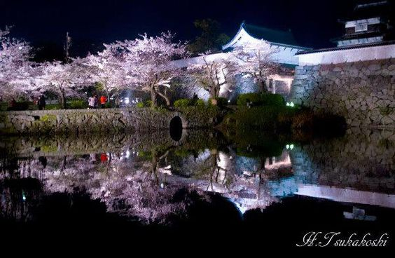 福岡城址の桜