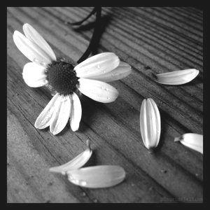 imperfect-daisy
