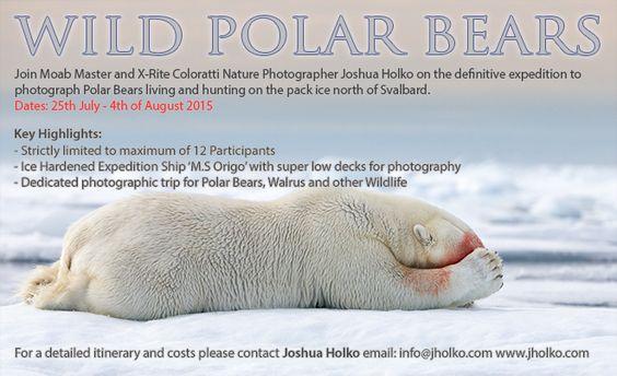 WildPolarBears2015