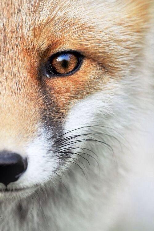 Fox eye... zeichnen!?