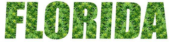 """Si bien la mayoría de este apoyo viene de las personas menores de 34 años, """"también los votantes mayores de 65 están a favor de legalizar la marihuana medicinal"""".  La misma encuesta en el mismo período, realizada en 2014 por la misma institución, dio que 67% de los votantes de Florida apoyaban la medida.  """"Es estupendo saber que estamos diez puntos por encima de lo que estuvimos en este estadio de la última campaña (2014)"""", dijo a la AFP Bianca Garza, portavoz de la ONG United For Care, que…"""