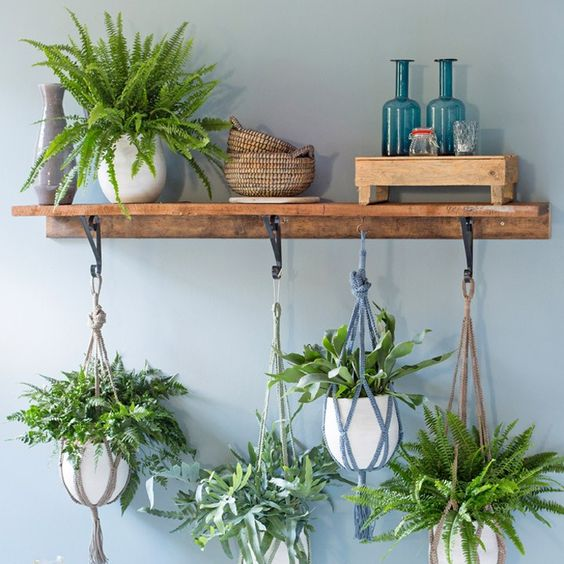 wandplank met hangplanten