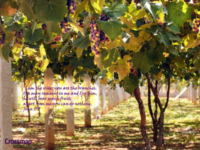 """""""I am the vine; you are the branches. If a man remains in me and I in him, he will bear much fruit; apart from me you can do nothing."""" - John 15:5"""