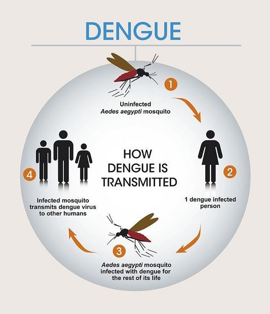 How dengue is transmitted. Graphic by Sanofi Pasteur, via Flickr