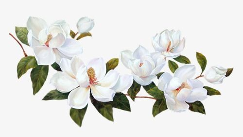 Flowers White Flowers Clipart Png Transparent Clipart Image And Psd File For Free Download Transparent Flowers Magnolia Tattoo Small Flower Tattoos