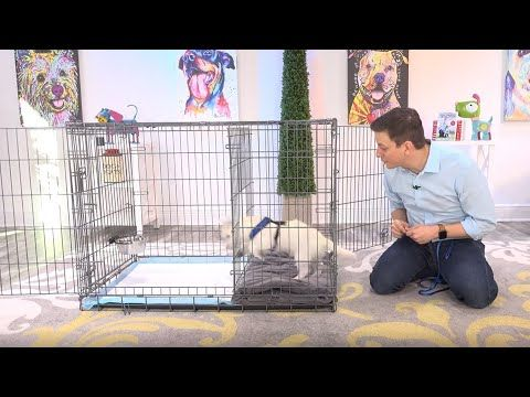 World Famous Dog Trainer Zak George Demonstrating The Potty Training Puppy Apartment See Za Potty Training Puppy Apartment Potty Training Puppy Puppy Training
