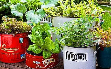 vegetables herbs tin gardening