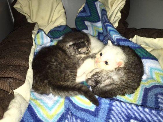 Gatinhos encontrados embrulhados em torno de sua Trembling irmã, mantê-la segura…