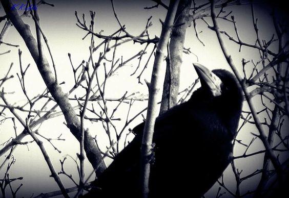 Kruk, Edgar Allan Poe