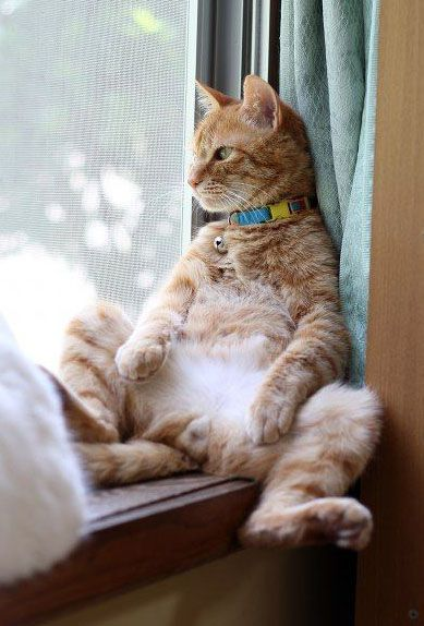 Orange cat reclining like a person in windowsill with meditative trance expression. #cutecat #concentration
