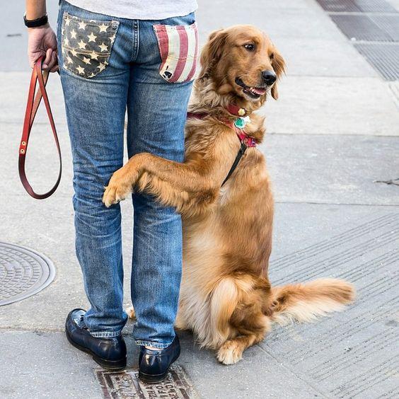 Photo by @irablockphoto (Ira Block)  Friends taking a break on 7th Avenue, New York City.  #dogs #newyorkcity #spring #chelsea #sonya7II