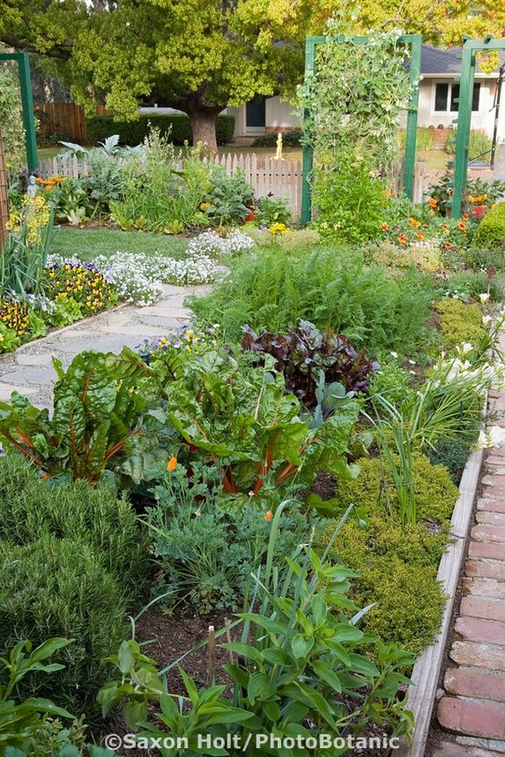 Ornamental edible garden mixed bed of herbs, vegetables, and flowers between paths in Rosalind Creasy front yard garden: