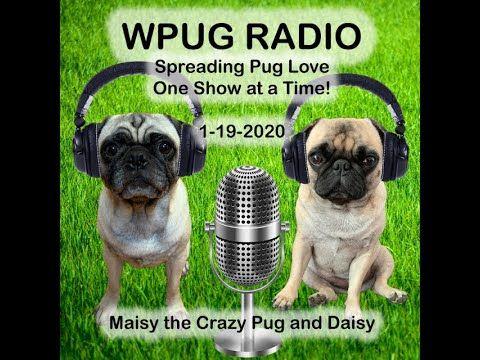 Wpug Radio 1 19 2020 With Maisy The Crazy Pug And Daisy Pugs