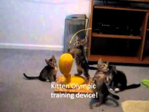 Cute Kittens. Funny things they do. You will laugh! FUNNY