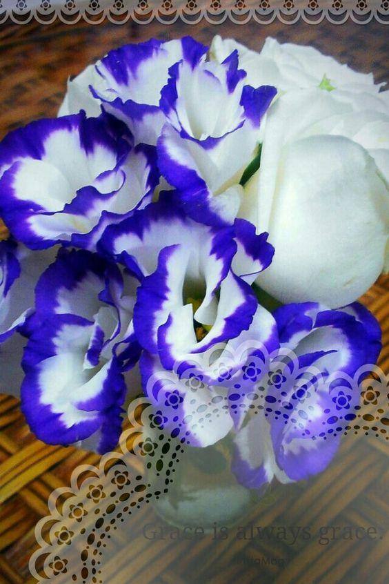 白玫瑰,紫色桔梗。